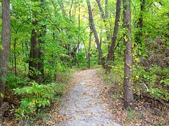 forest-226914__180.jpg