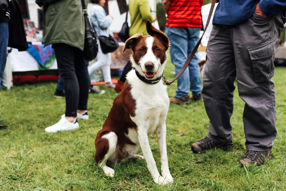 APPLY NOW! - The Hounds of Heide is a one-off event for you and your pooch.Hounds of Heide will take place on Sunday 21st of October at Heide Museum of Modern Art from 10am and there will be an eclectic mix of canine-themed art and design stalls, kids activities, free vet checks and much more...With over 5,000 visitors expected, the event promises to be truly memorable so get involved today!