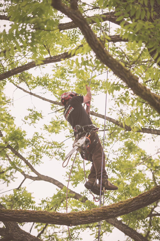 Hansen Tree Service-14 (1).jpg