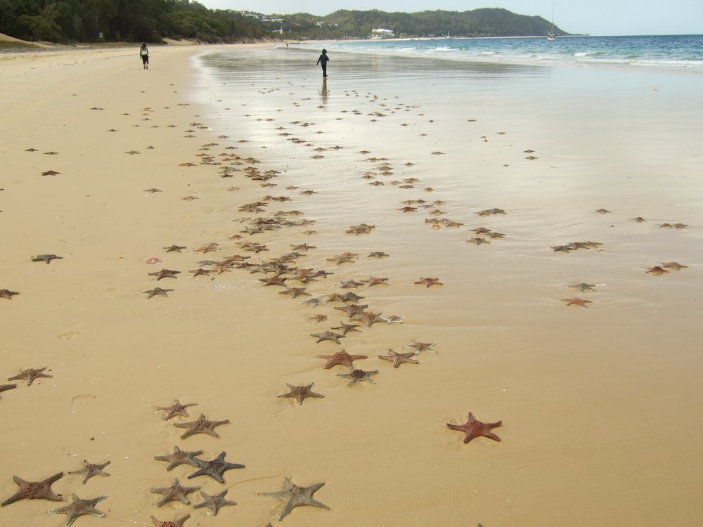 starfish-beach-168703.jpg