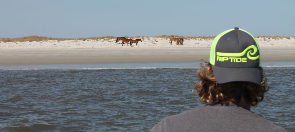 boat-tours-of-cumberland-island-wild-horses2.jpg