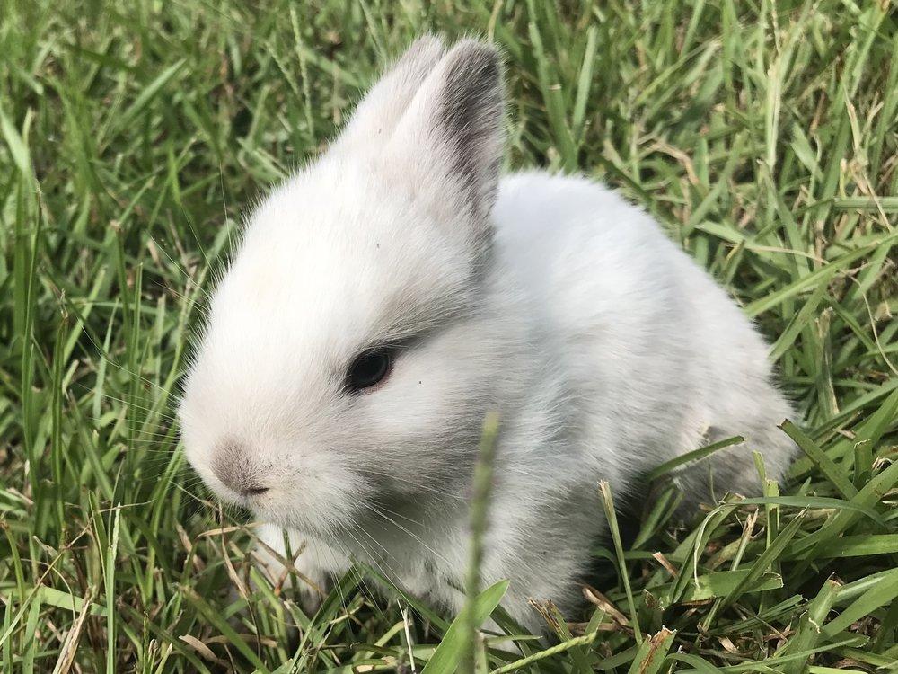 baby bunny 3.jpg