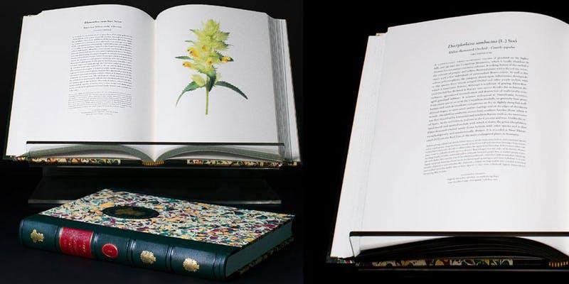 The Transylvania Florilegium images: Copyright A. G. Carrick Ltd.