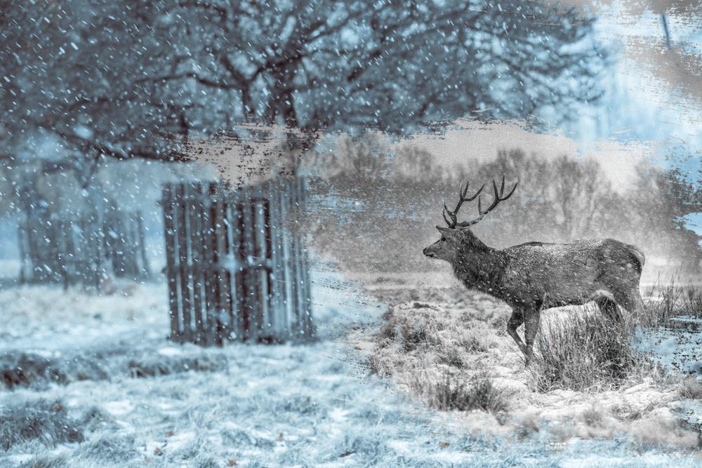 Winter Deer in Bushy Park by Cristina Schek (b) (3).jpg