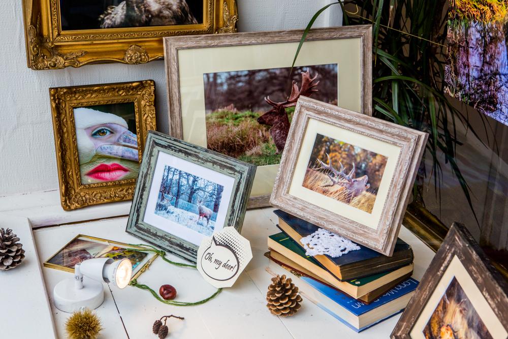 The Deer Whisperers, Leigh Gallery Window Display by Cristina Schek (90).jpg