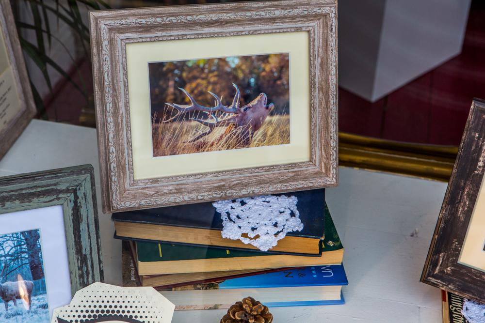 The Deer Whisperers, Leigh Gallery Window Display by Cristina Schek (108).jpg