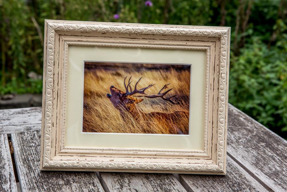Autumnal Deer in Bushy Park by Cristina Schek