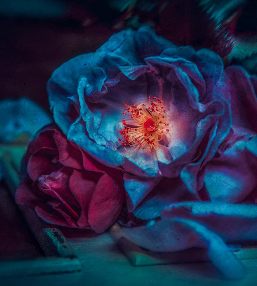 Blue Rose II @ Twin Peaks Studios, 2019 by Cristina Schek