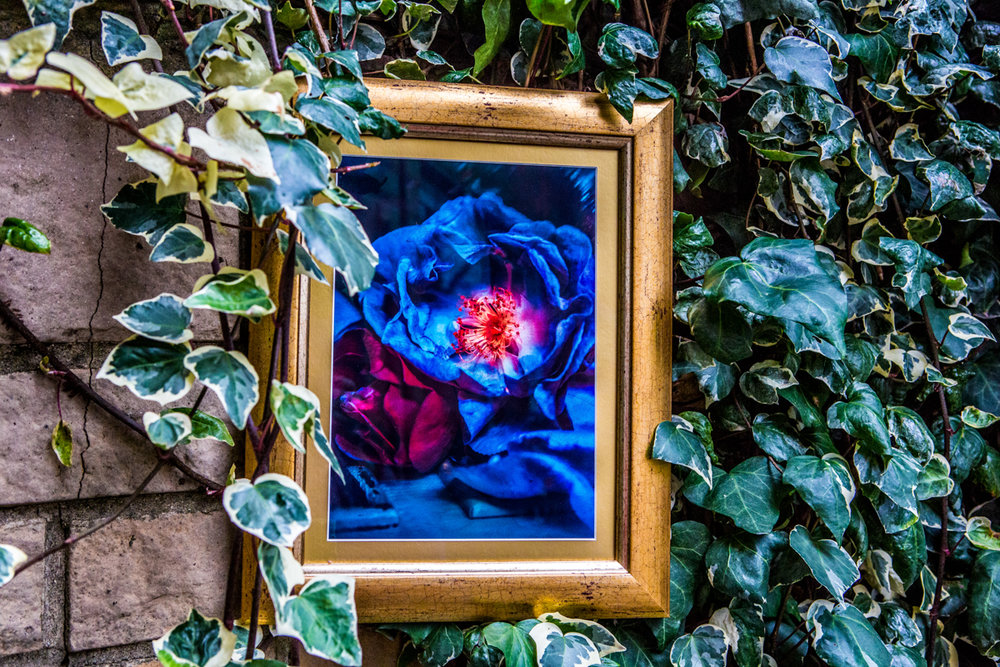 La Vie En Roses Series by Cristina Schek (12).jpg