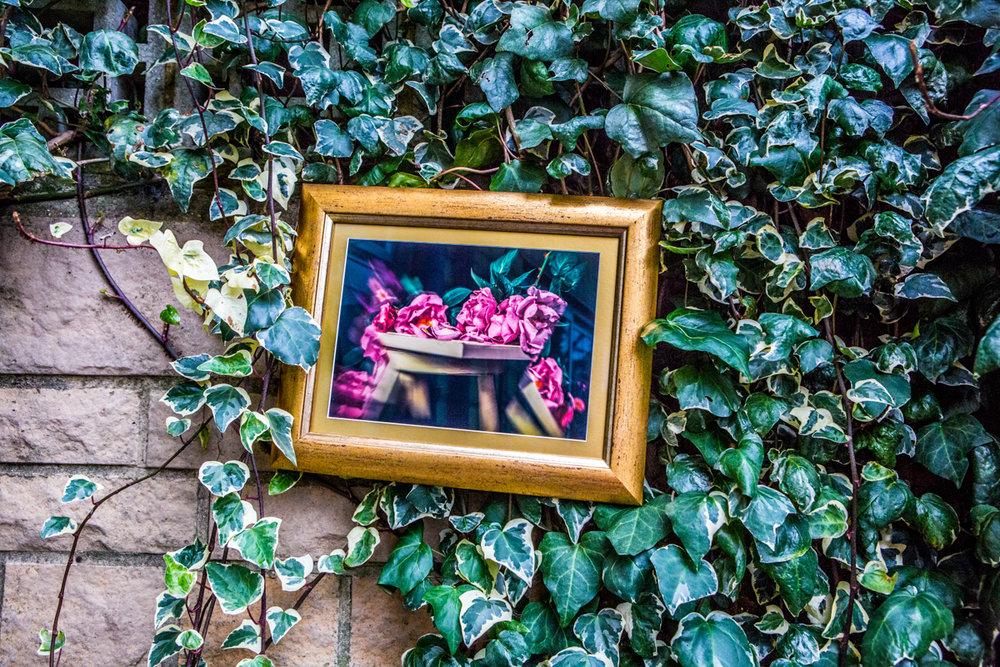 La Vie En Roses Series by Cristina Schek (22).jpg