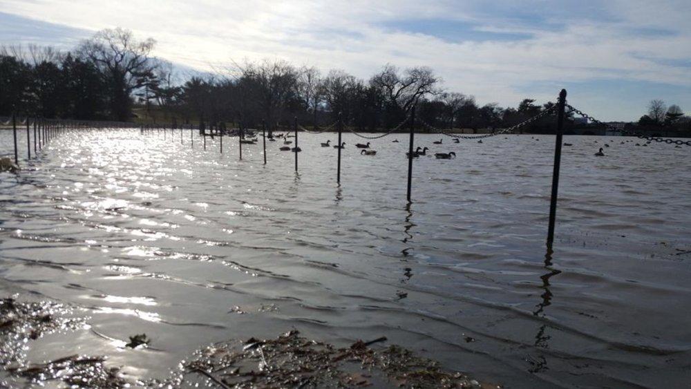 Tidal Basin Flooding 3.jpg