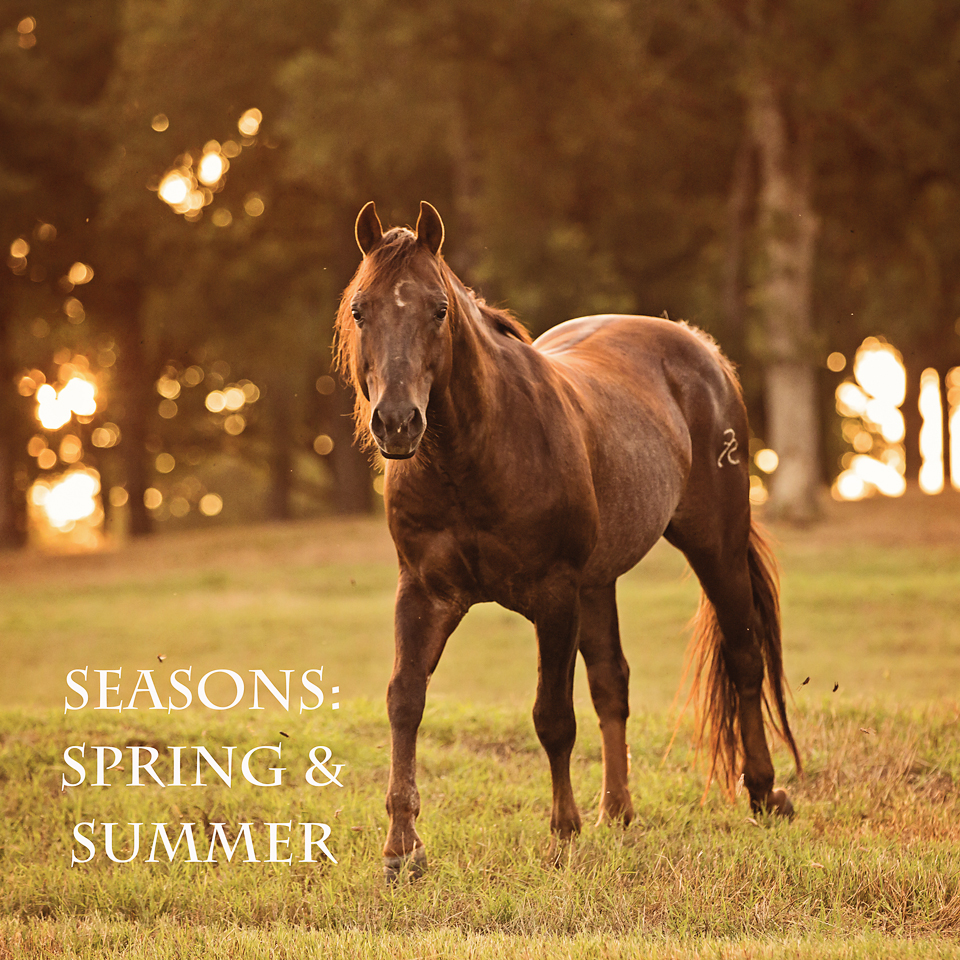 seasons - spring & Summer.jpg