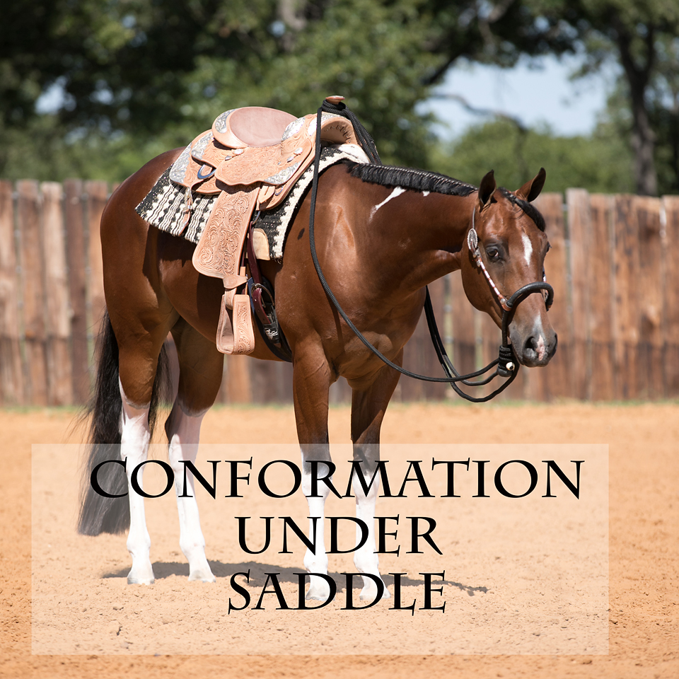 Equine Under Saddle Conformation