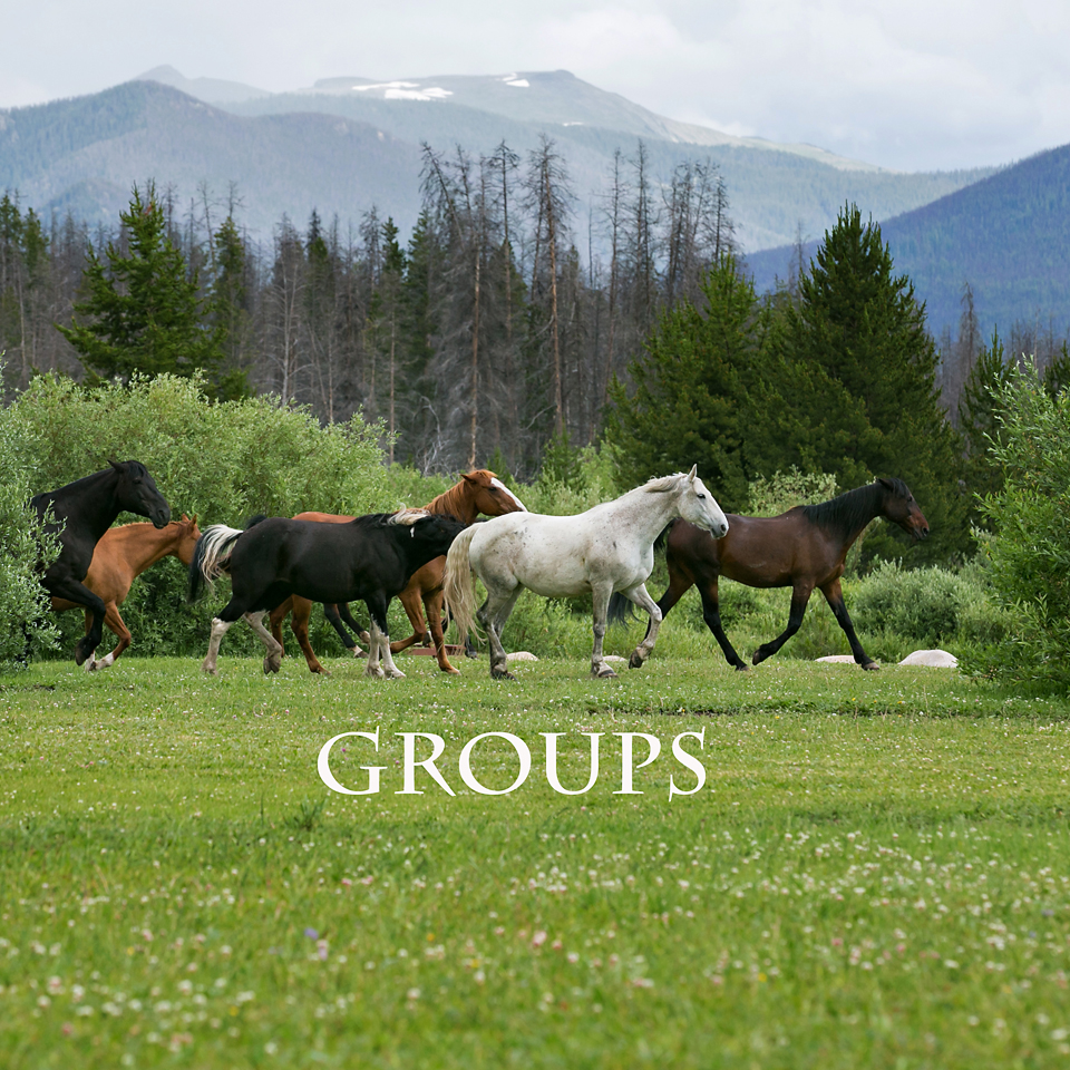 Equine Groups and herds