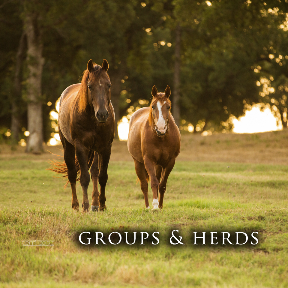 Groups & Herds