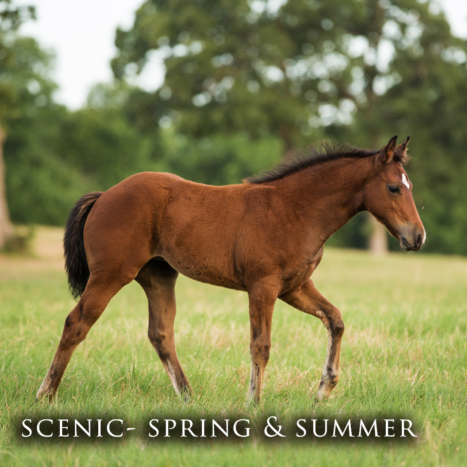 Scenic - Spring and Summer