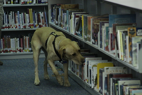 Bedbug dog sniffing books