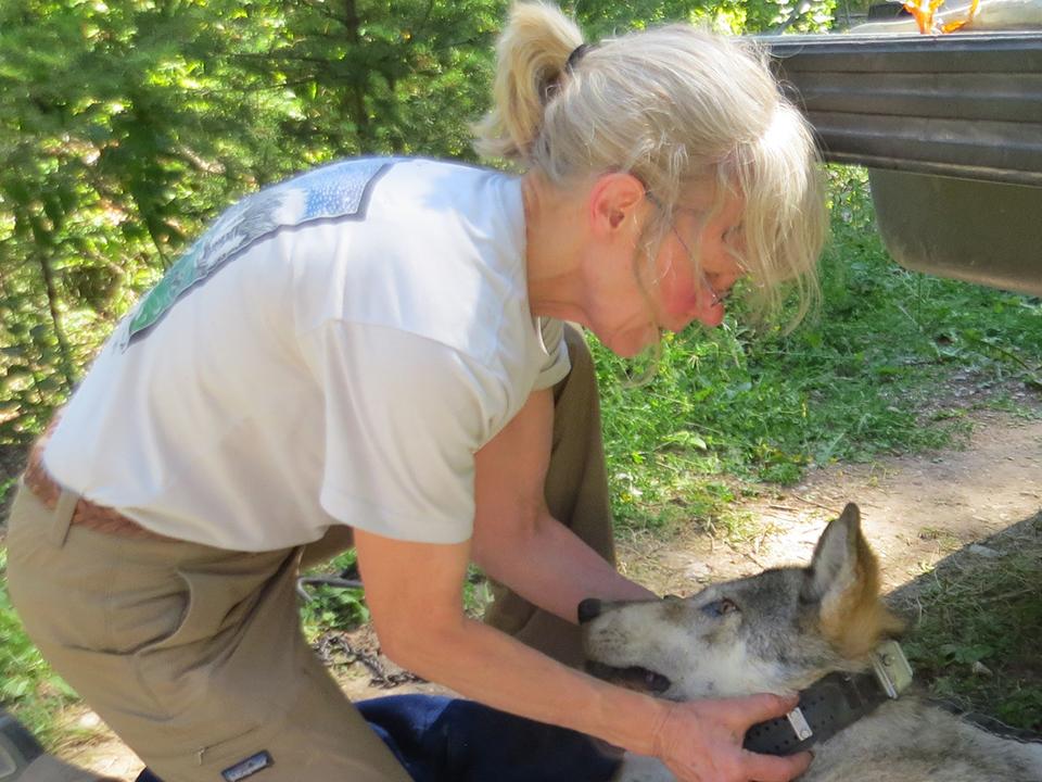 Diane Boyd - Region 1 Wolf & Carnivore Specialist, Montana Fish Wildlife & Parks