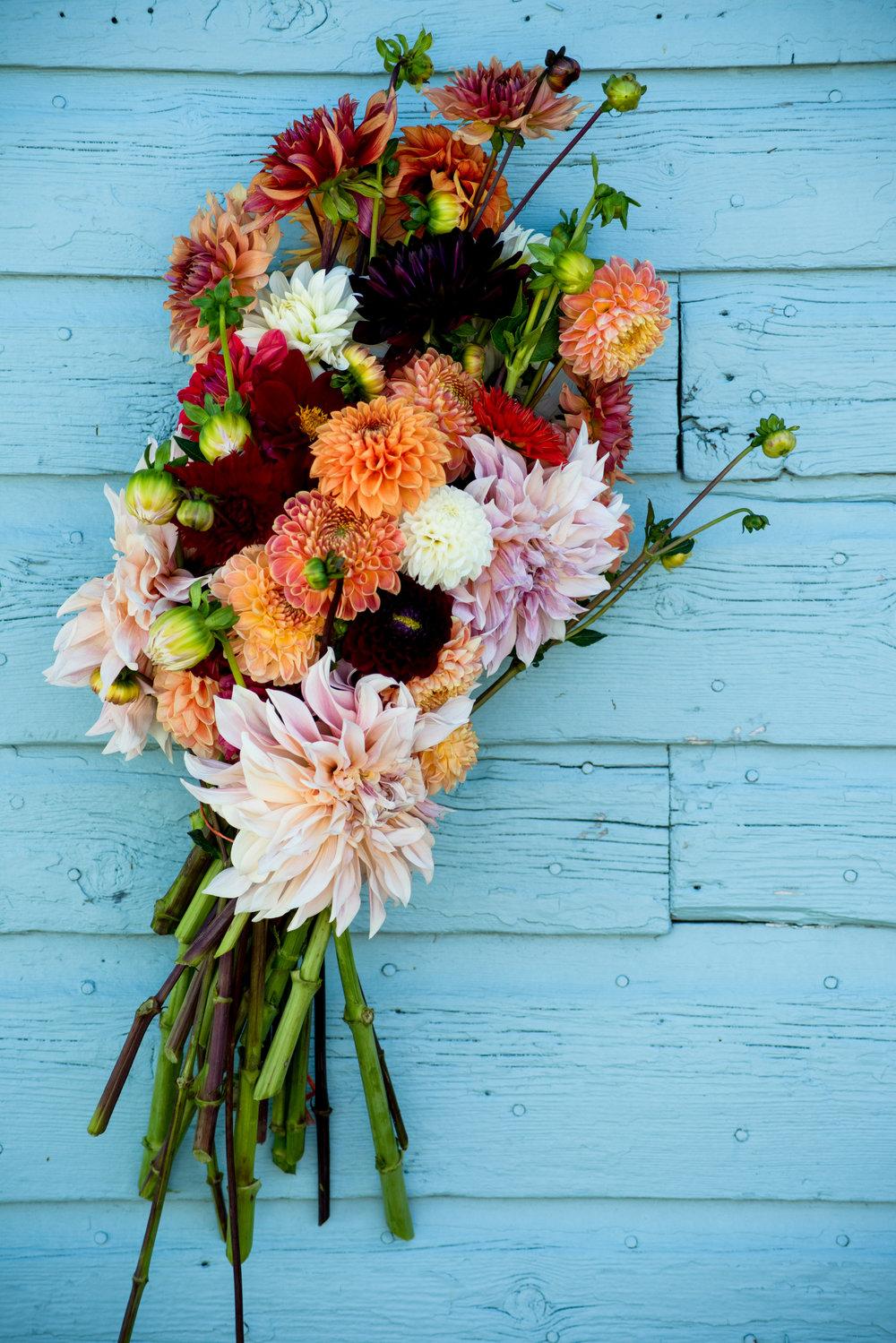 Flowers_RockyCreekFarm_Greener_Visuals_Photography_2018-4926.jpg
