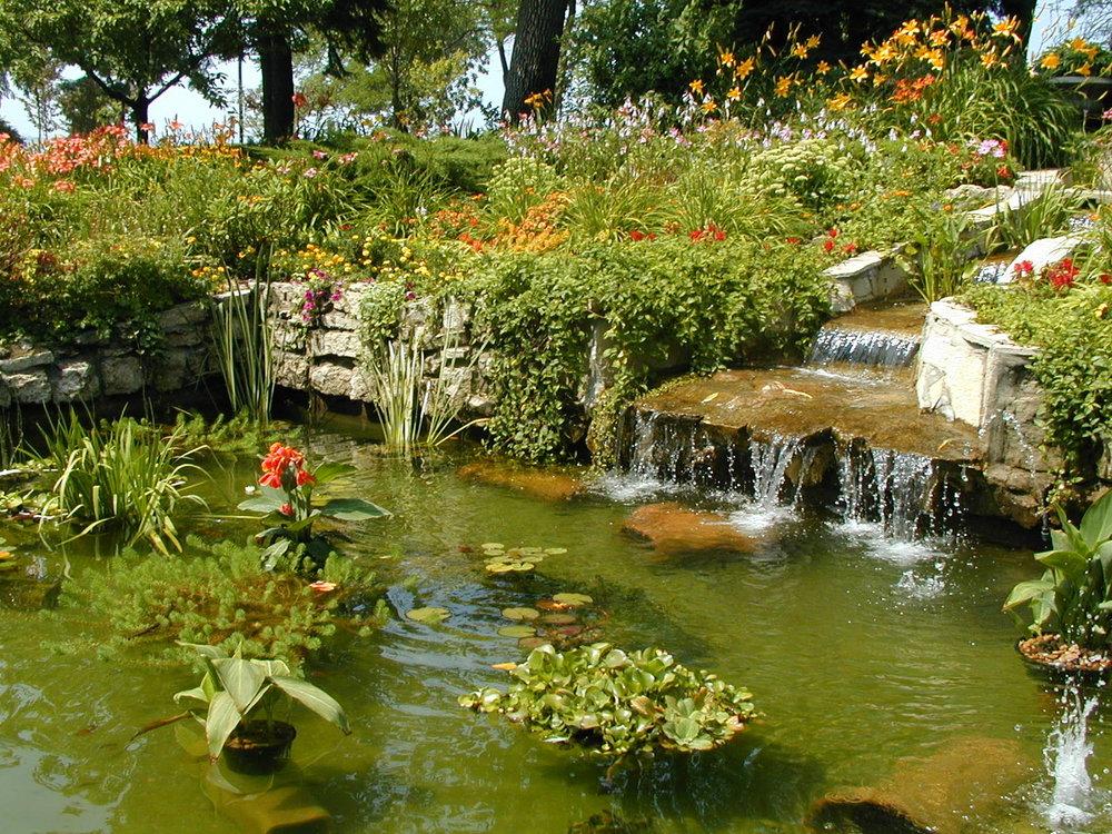 Pond in bloom.jpg