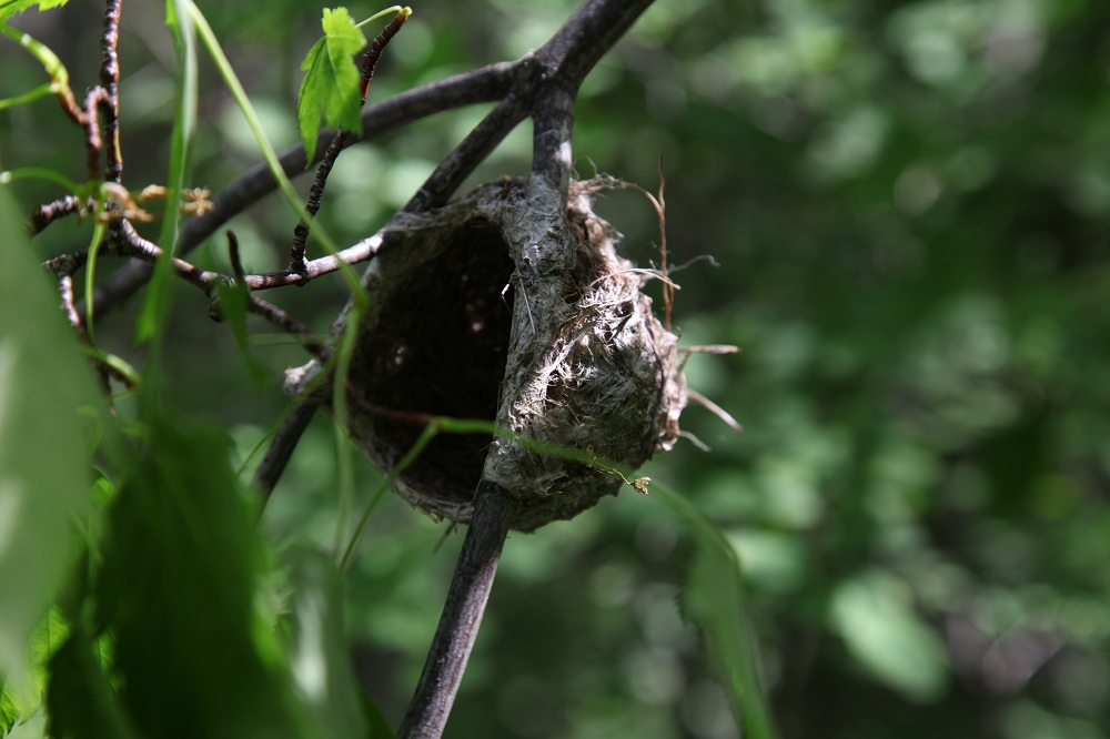 a-nest-at-gibbs-creek_6298864181_o.jpg