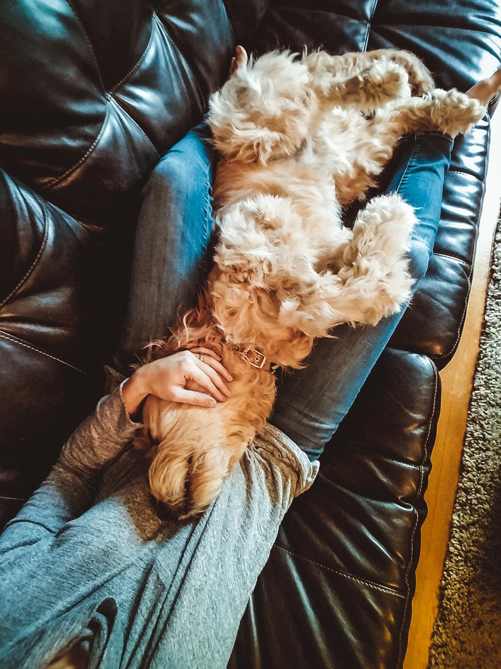 cuddling goldendoodle