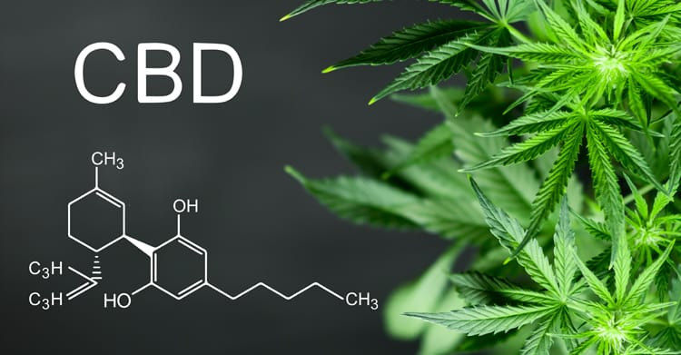 """Types of CBD - Full Spectrum- A whole plant extract containing everything the hemp plant contains including the .3 THC. Even though it is a very small amount of THC, it will most likely cause a positive drug test when used consistently over time. The .3 THC is not enough to be psychoactive or mind altering but it can help the CBD to work better with the """"entourage effect.""""Broad Spectrum- Contains everything from the hemp plant except the .3 THC. This is best if passing a drug test necessary. Some products contain an isolate and terpenes for different effects or to prevent tolerance build up.Isolate- Contains just the CBD compound only. When only an isolate is used regularly a tolerance can build up in 20 to 30 days. Isolates are great for short term use or to supplement with another CBD regimen."""