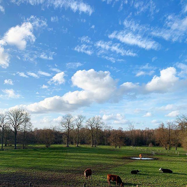 Guten Morgen @bravebuck 😊 deinen Tieren geht es super 💚 #einstückland #detlevbuck