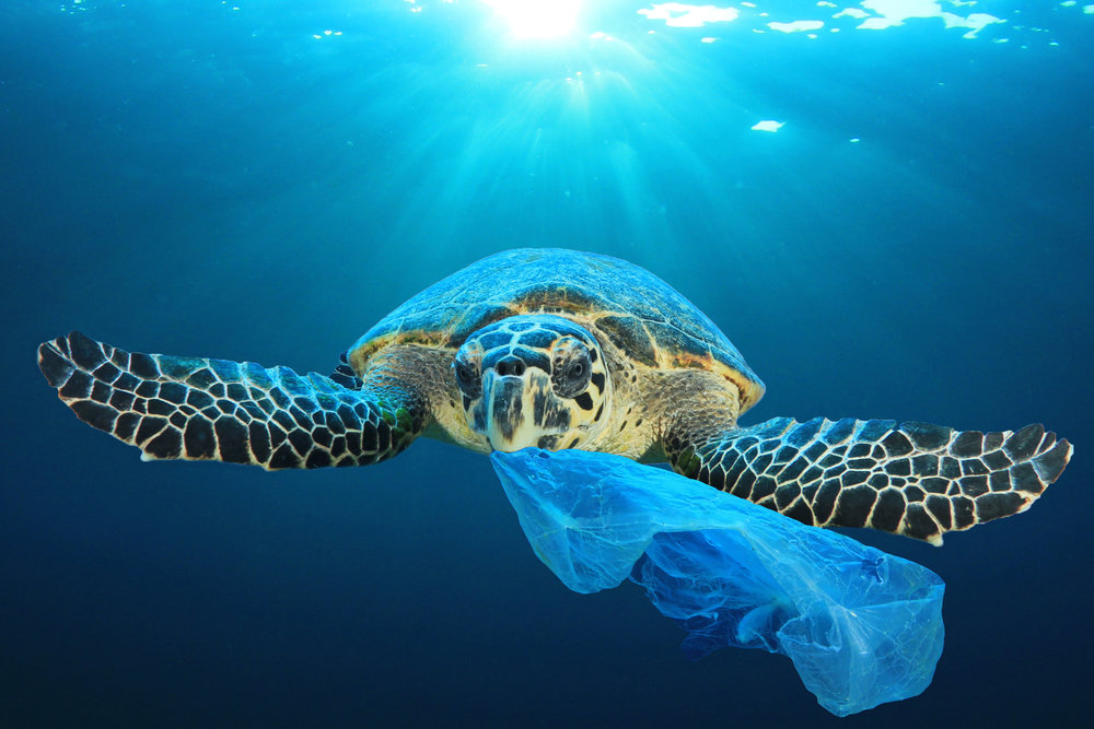 Turtles mistake plastic bags for jellyfish and eat them which kills them.