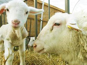 Shepherds way web.jpg