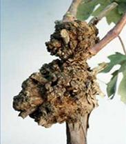Control plant disease