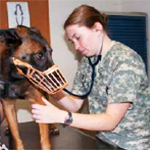 Infections of Working Dogs