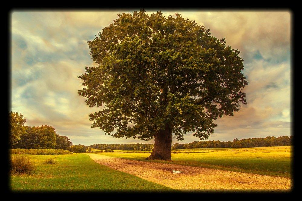 Canva - Tree, Park, Nature.jpg