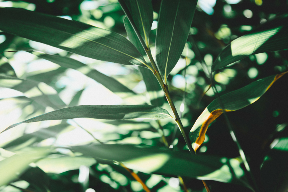 light and leaves.png