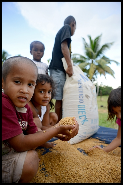 Photojournalist Andrew Tonn recently spent some time with us in Rus Rus. Here is a wonderful picture of some of the village children helping spread a newly harvested rice crop being set out to dry. For more of Andrew's work go to www.AndrewTonnphoto.com