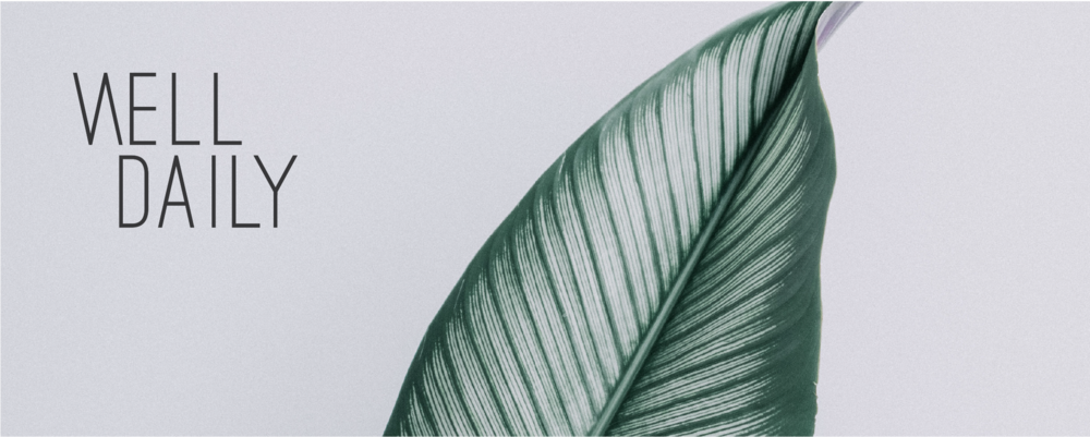 Well Daily logo on a photo of a leaf by Marcy Media as part of the portfolio page for Salt Design Co.