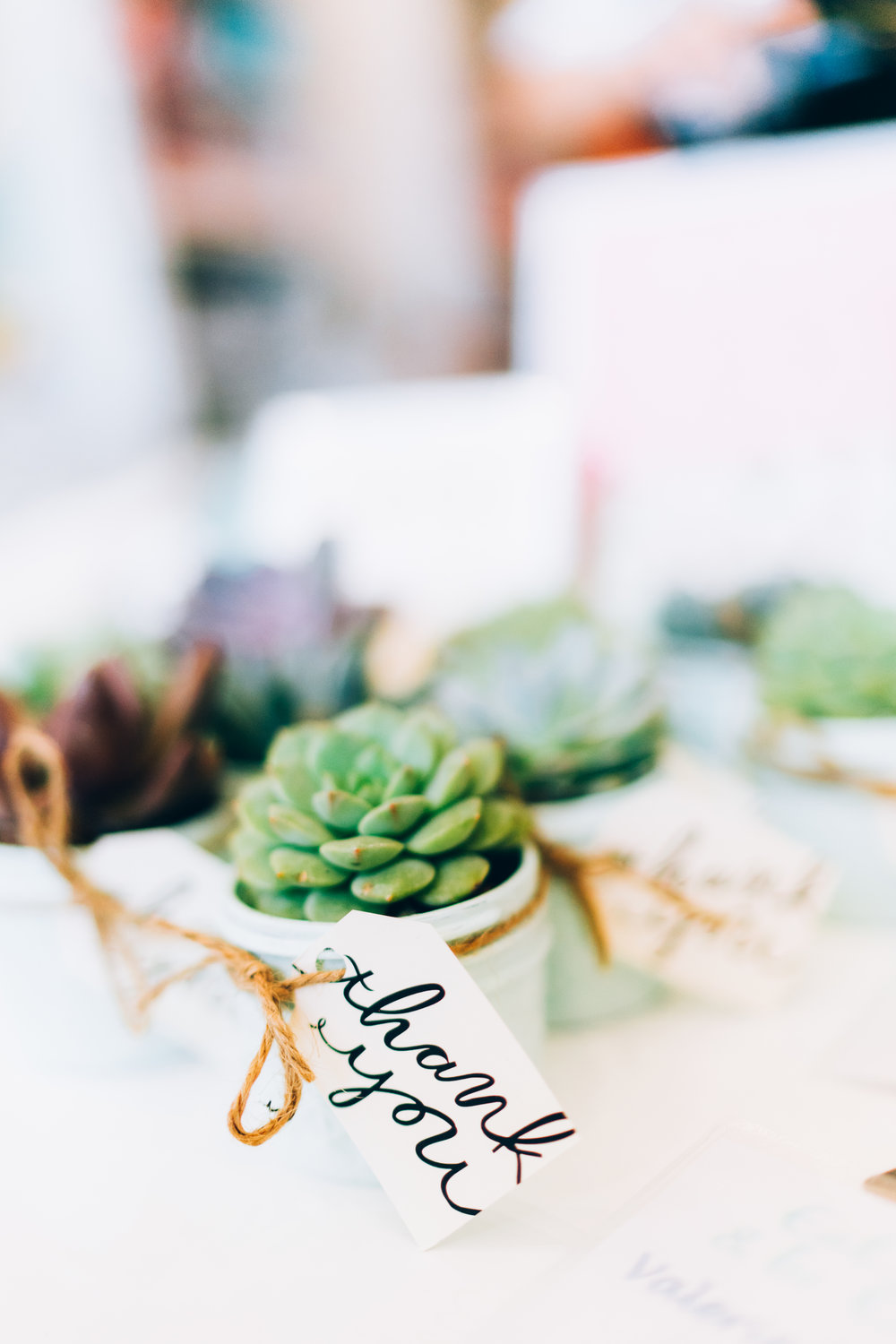 Succulent Gift Ideas - Thank you gifts for clients