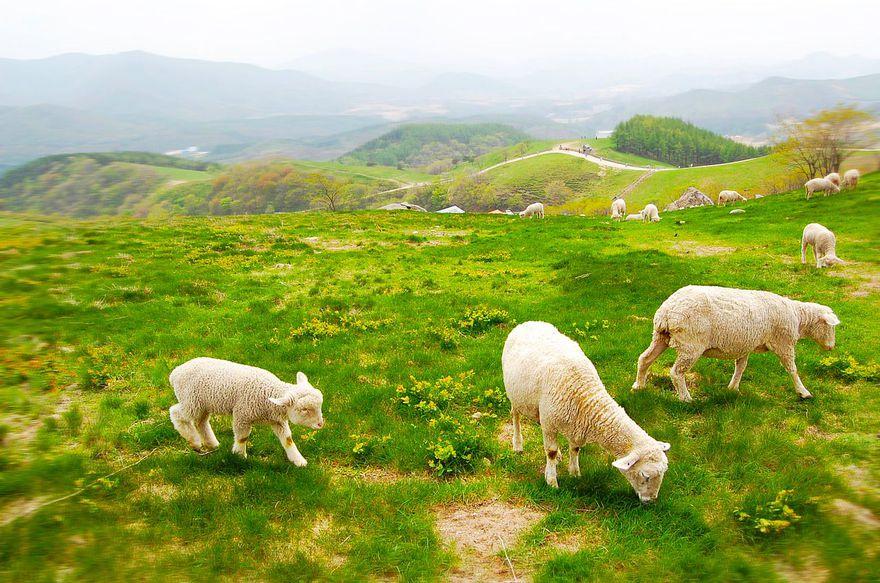 1443147001634_cattle-ranch-645959_1280.jpg