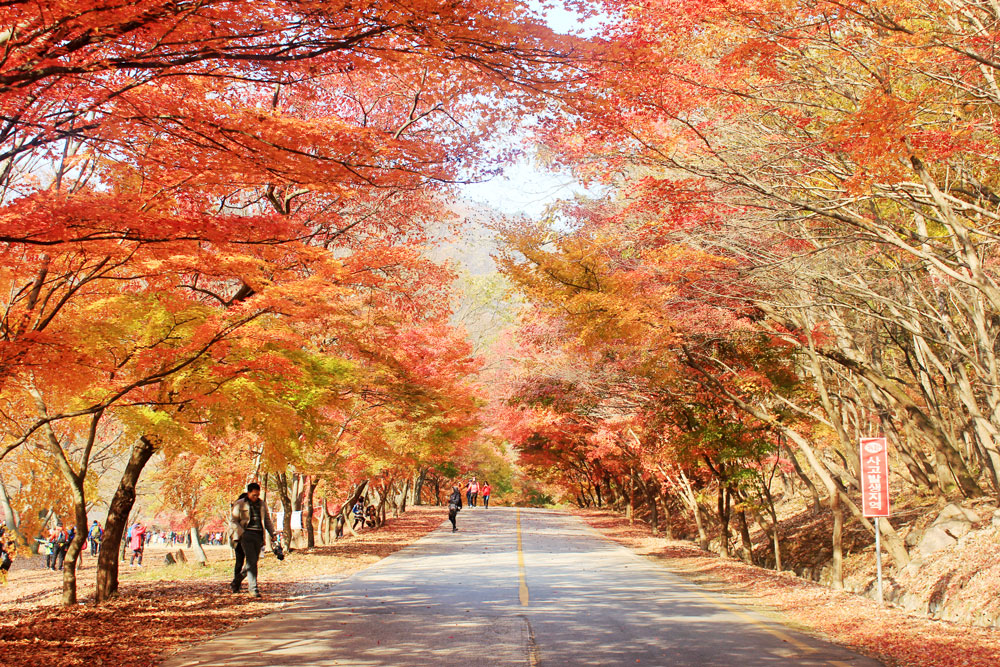 naejangsan-autumn-colours-feature.jpg