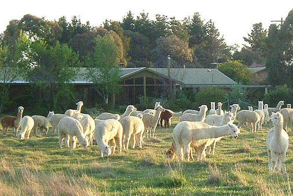 Glenhope B&B and Farmstay