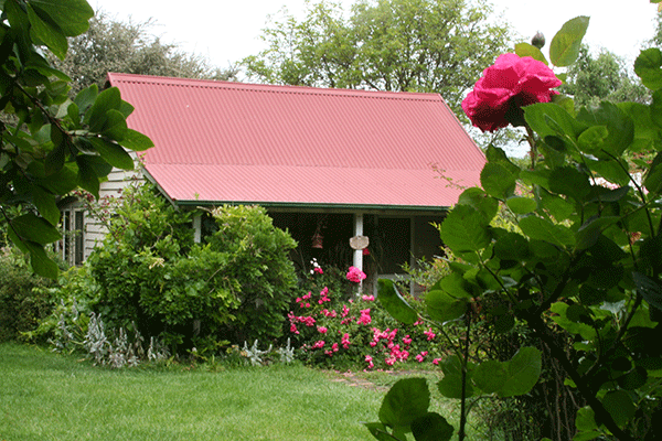 Smell the roses at Poppy's Cottage B&B and Farmstay