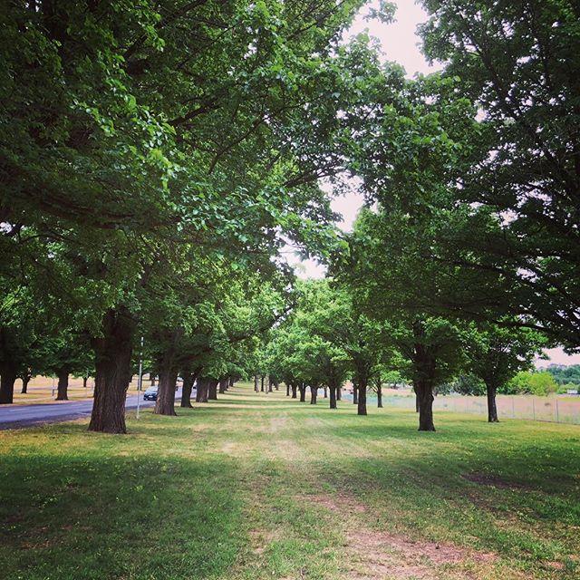 Elm Avenue at the University of New England @uninewengland  #newenglandhighcountry #ruralstay #newenglandregion #bnb #farmstay #accomodation