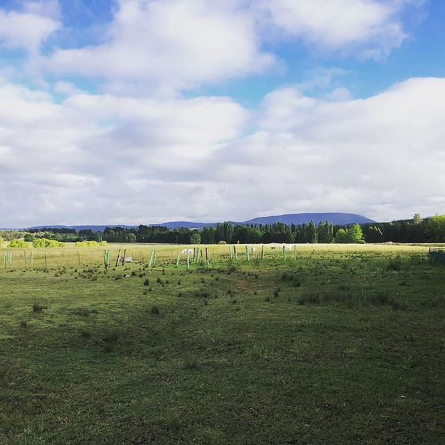 A view of Mount Duval. Armidale. Rural Stay has something for everyone B&B and Farmstay's. Check out our website www.ruralstay.com #ruralstay #newenglandhighcountry #bnb #farmstayaustralia #accommodation #newenglandregion #armidale #gleninnes #uralla #guyra #walcha #tenterfieldnsw #boutiqueaccommodation #nswtourism