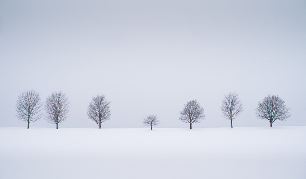 Image taken during a heavy storm, with the background completely obliterated by falling snow