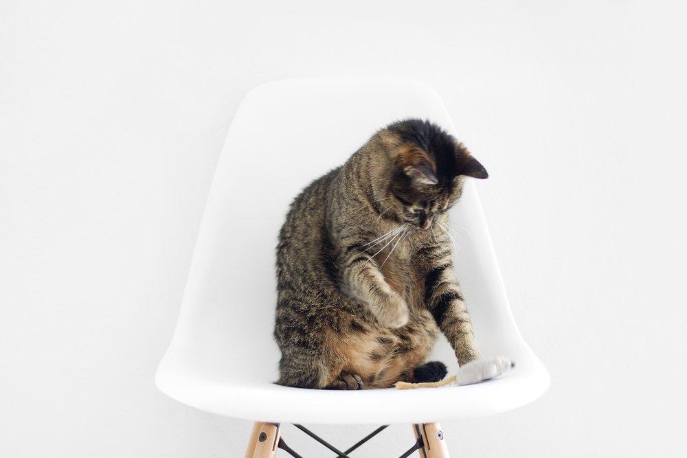 CAT TOYS -
