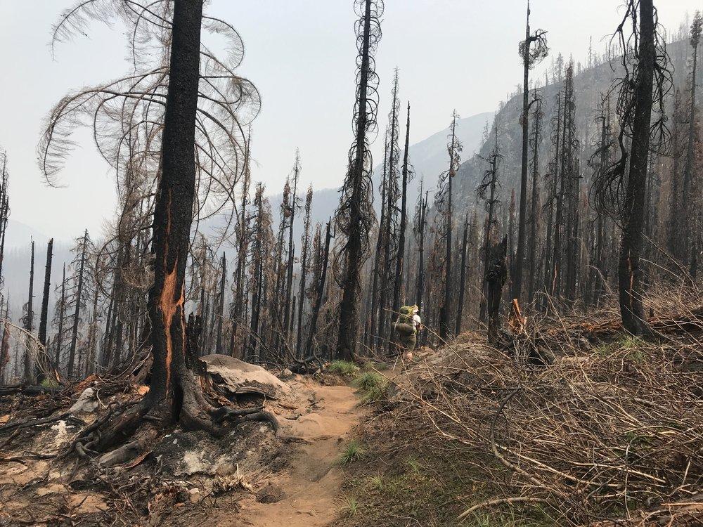 Recent Fire -