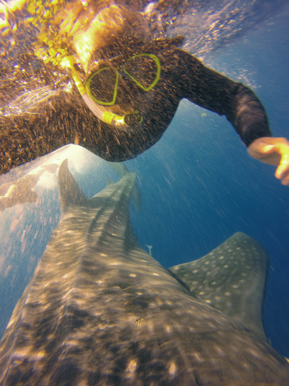 selfie with a whale shark