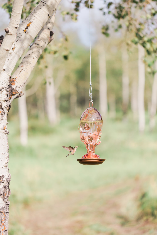 Hummingbird feeder.jpg