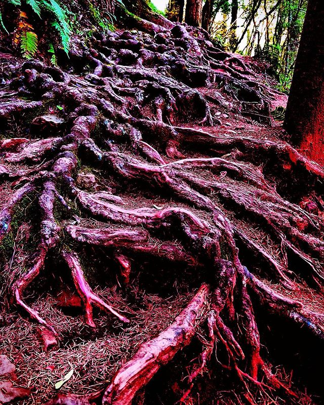 Roots scraping the cavernous pits of hell, line blurred between shadow and pure chaos, it tastes the numinous aqua vitae, and is content. #poetry #poemsofinstagram #shortpoems #naturephotography #trees #roots #alchemy #carljung #spiritualwarfare #photography #hell #muirwoods #hiking #fractal #chaos #lifeincolor