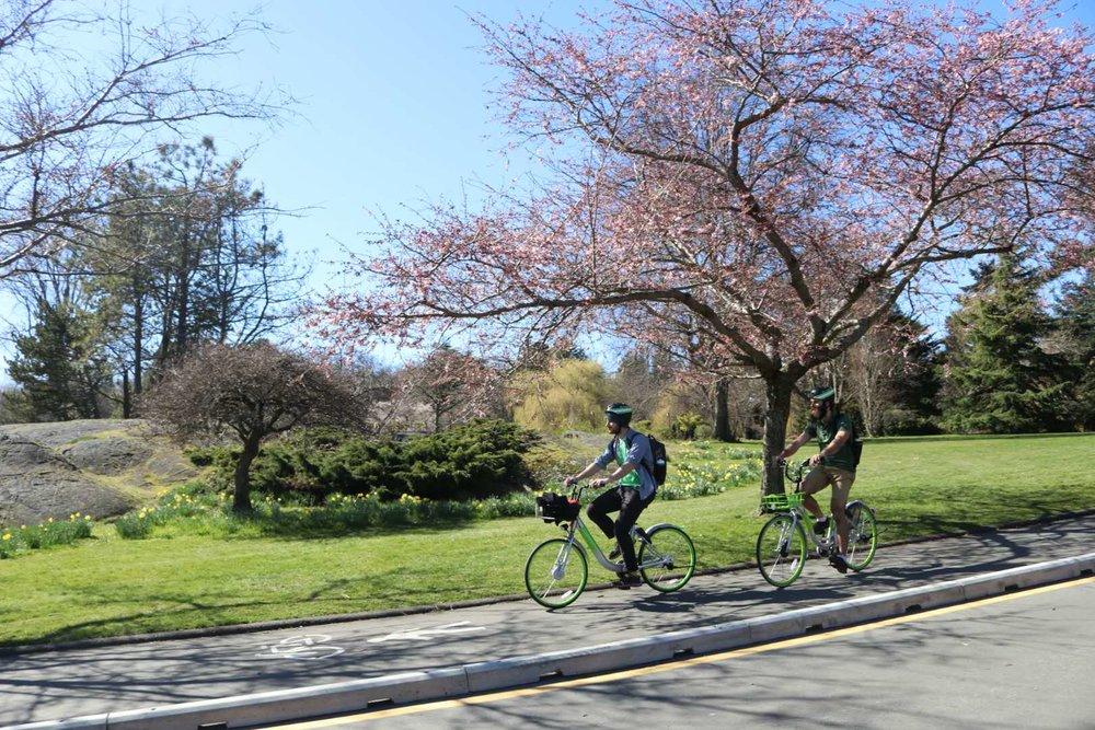 u-bicycle-spring.JPG